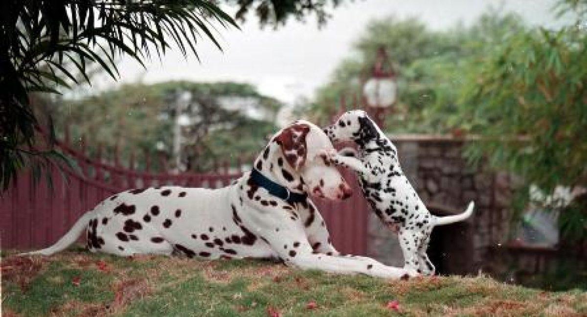 sevgililer-gunu-puppy-love
